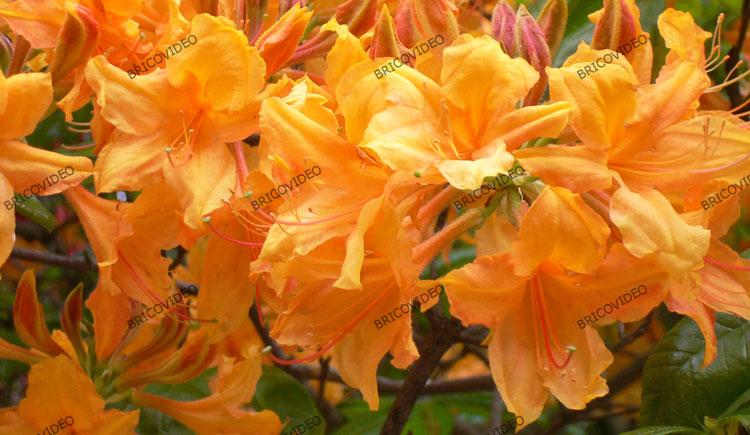 Conseils sur le jardinage questions r ponses entretiens for Conseil sur les plantes
