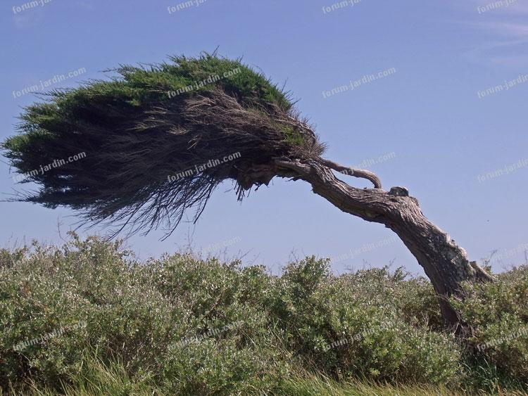 Ça décoiffe un arbre photo Alma
